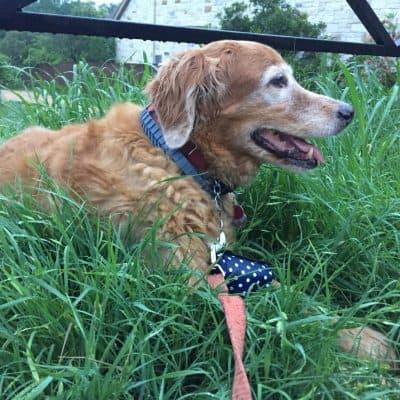 Adams Flea & Tick Collar for Dogs & Puppies