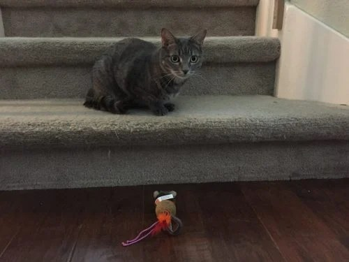 Pawtastic Hartz Delectables SqueezeUp Cat Treats - Review flash cat toy