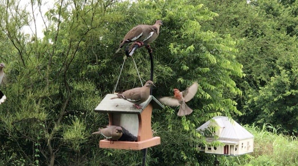 Mitchell Lake Audubon Center - birdinging in south san antonio