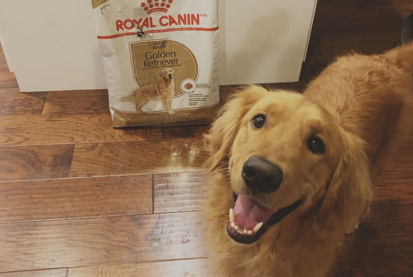 Dog Food for Golden Retrievers Happy Dog