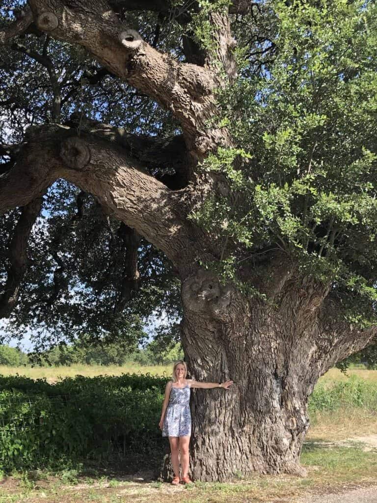 wedding oak tree