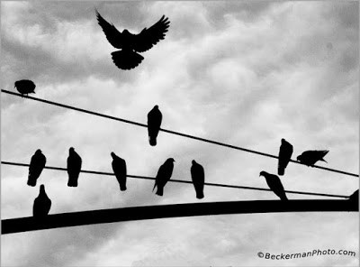 Burung-Diatas-Kabel-Jala-Jala-Tidak-Kesetrum