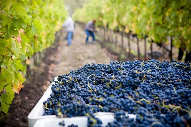 Calendrier de la vigne