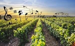 Musique dans les vignes
