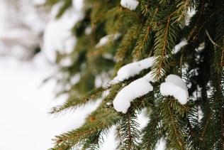 Baum mit Schnee bedeckt