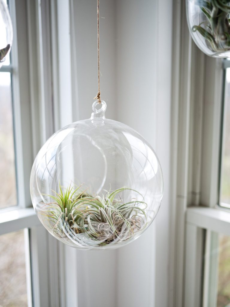 Air plants are delicately beautiful. Place by the window to draw your eyes to the outside view. Photographer: Jeff Sheldon from Unsplash