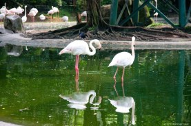 Flamingos @ KL Bird Park