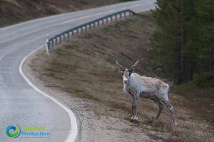 road trip voyage Norvège Varanger
