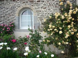 30- roses anglaises