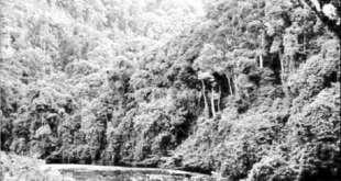 Việt Nam có hệ sinh thái rừng phong phú và đa dạng.