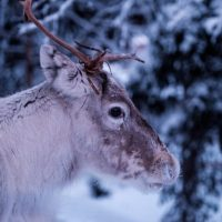 We are going to Lapland