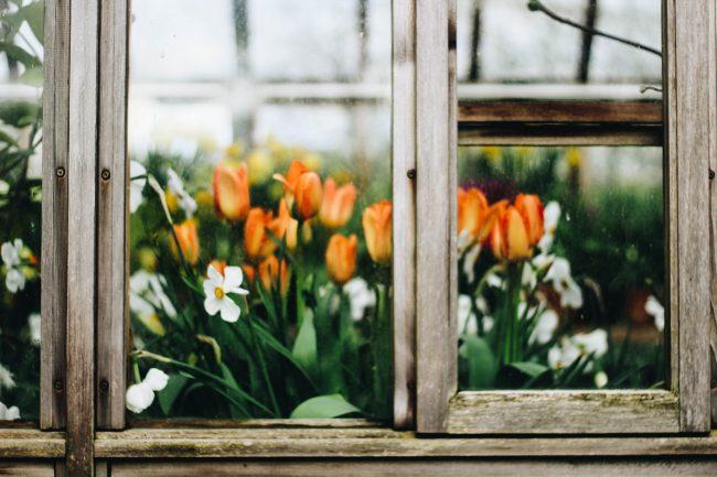 keep-your-garden-looking-beautiful