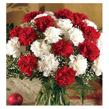CF Red & White Carnation Flowers