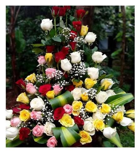 CF Colors of Roses