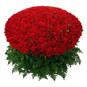 CF Premium Roses