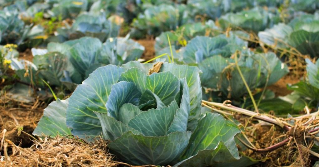 Ξέρεις για ποιο λόγο φουσκώνεις τόσο με τα αγαπημένα σου σταυρανθή λαχανικά;