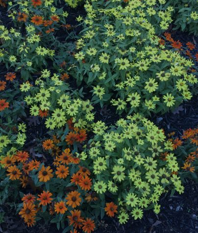 darken flower image