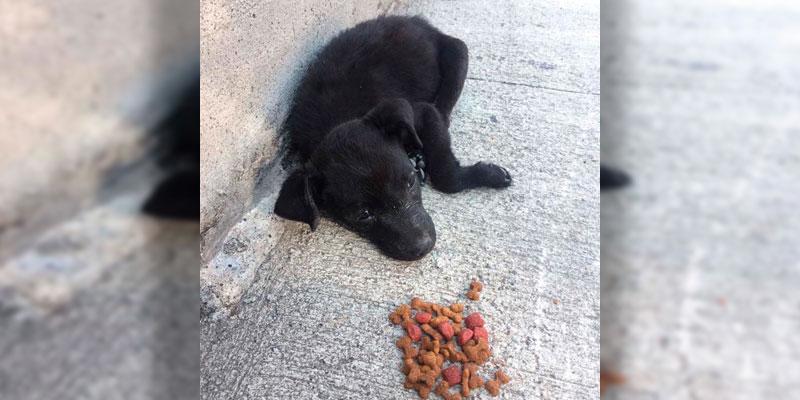 cachorro-abandonado-Angui-Tete