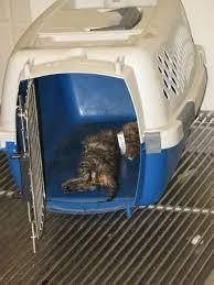 peta maltrato animal