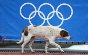 Activistas rescatan perros callejeros en los juegos de Sochi 2014