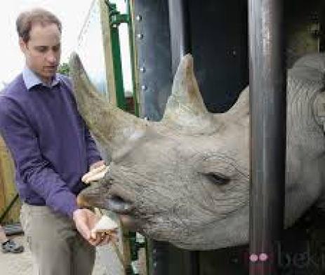 El príncipe Harry polémica foto por matar a un Búfalo en el 2004 1