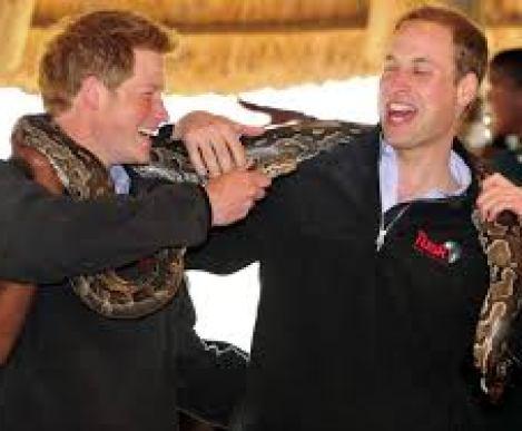 El príncipe Harry polémica foto por matar a un Búfalo en el 2004 2
