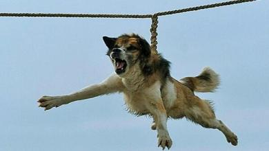 "Photo of Ritual búlgaro del ""giro del perro"" indigna a animalistas del mundo"