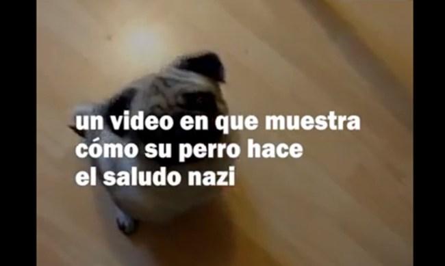 perro saludo nazi