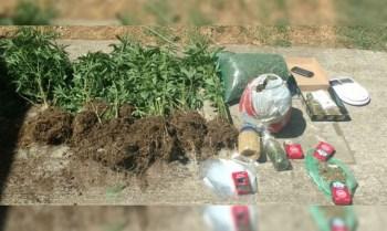 marihuana semillas Nahuatzen