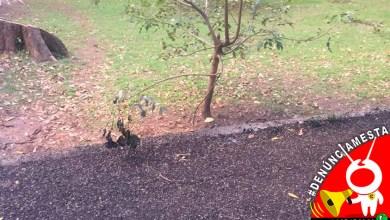 #Denúnciamesta chapopote ecocidio Planetario Morelia b