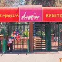 zoo león Morelia
