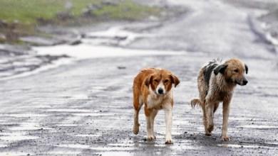 Photo of En SLP Multa De Hasta 33 Mil Pesos Para Quien Abandone A Sus Mascotas