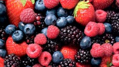 berries-empleo-Michoacán-a