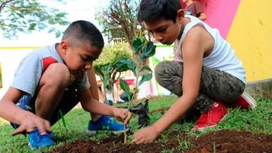 reforestar-niños-aguacates-Uruapan