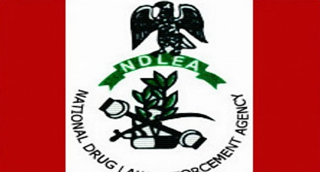 Ndlea Arrests 16, Recovers 672.6g Of Hemp In Jigawa