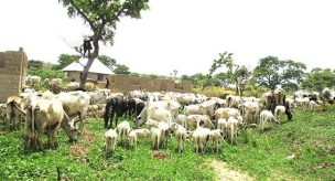 Image result for FAO urges FG to promote grazing reserves