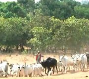 Police Seek Proactive Steps To Curb Herdsmen-Farmers Crisis