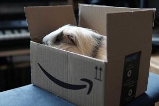 Amazon Prime Day 2021 è alle porte, anche per i cybercriminali