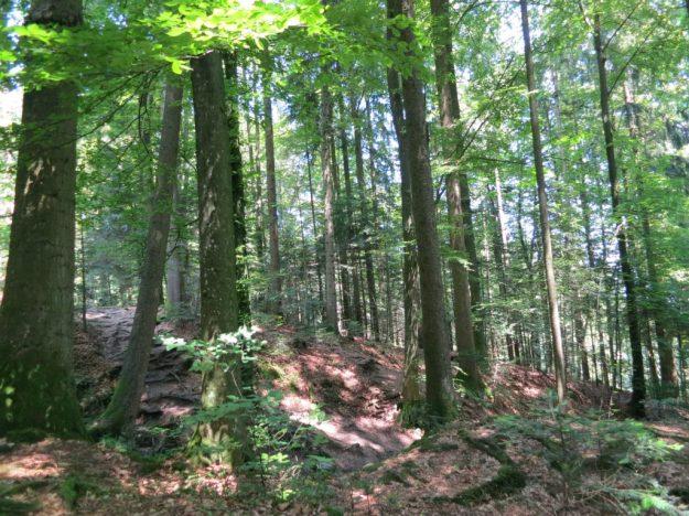 Treescape trail