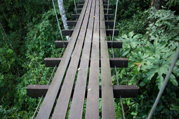flight-of-the-gibbons-bridge2