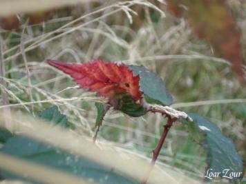 Feux d'automne