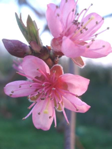 Ti-pouce et le printemps