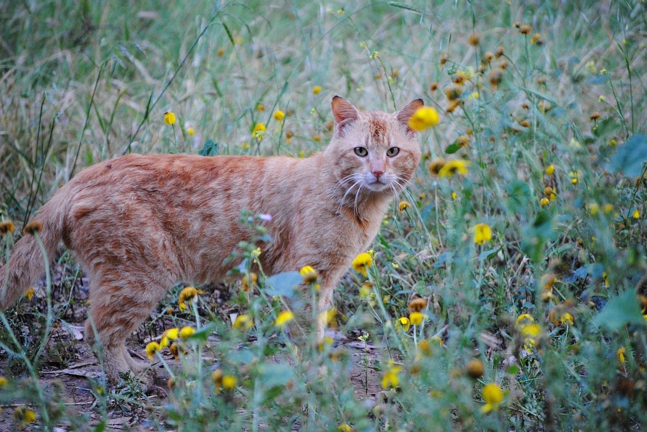 Le chat qui fit le printemps