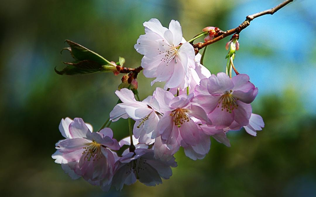 verset de printemps