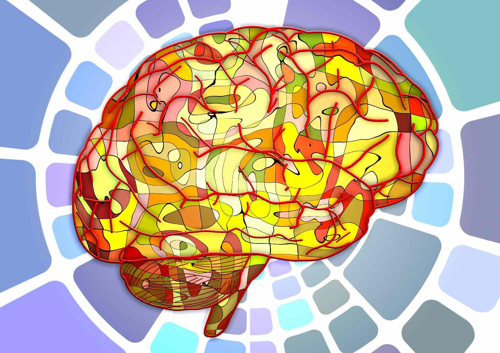 Pédagogie Waldorf-Steiner et neurosciences