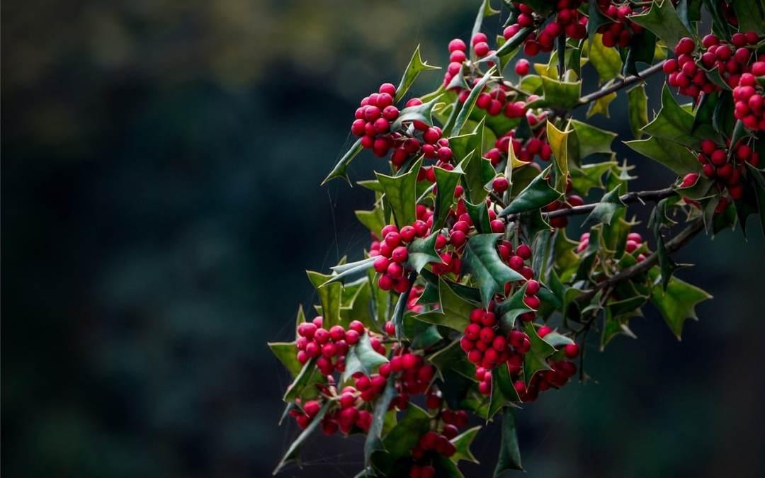 Conte cherokee pour le solstice d'hiver