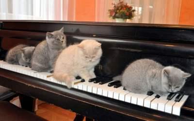 S'entraîner à chanter