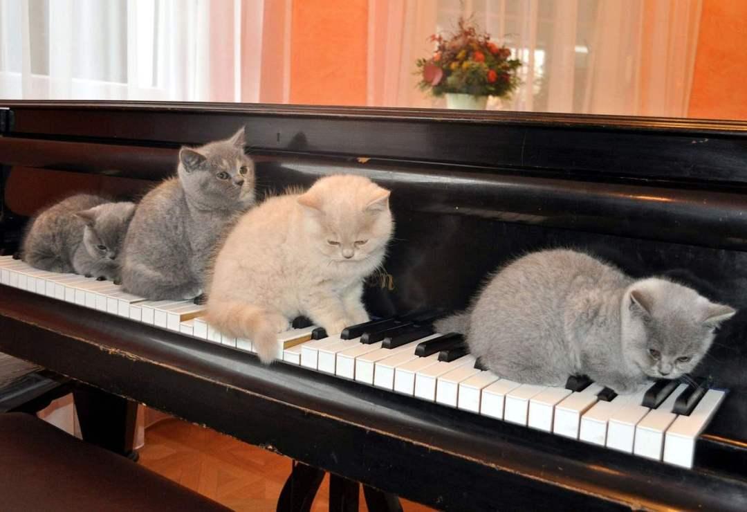S\'entraîner à chanter