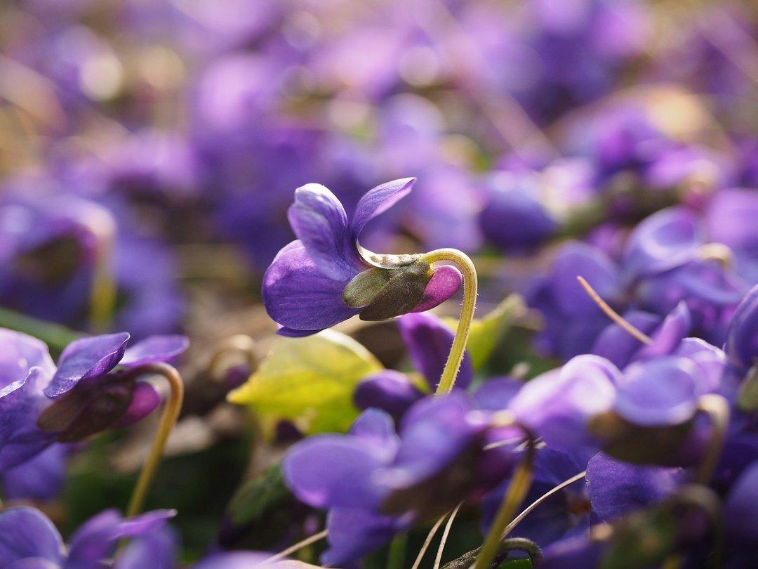 Deux poèmes de printemps