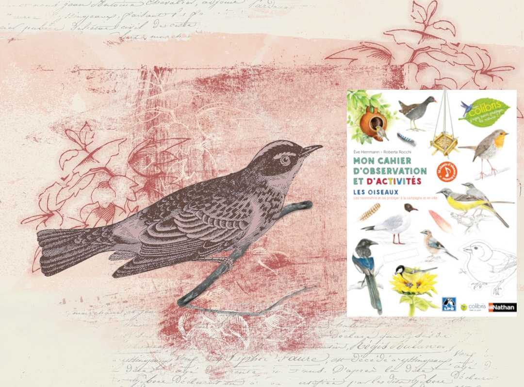 Mon cahier d'observation et d'activités, les oiseaux